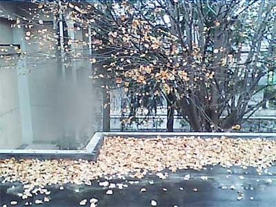 20101126_02.jpg